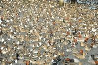 餌に群れる水鳥
