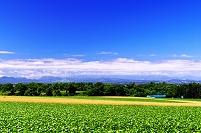 北海道 石狩平野を望むなだらかな田園の丘