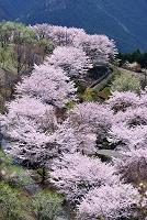 群馬県 桜山公園