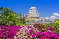 兵庫県 ツツジと姫路城