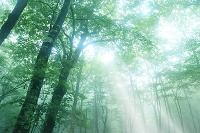 霧につつまれる森と光