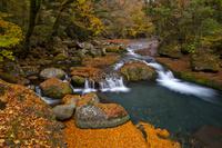 熊本県 紅葉映える菊池川