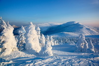 宮城県 宮城蔵王の樹氷