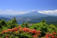 山梨県 新道峠のツツジと富士山