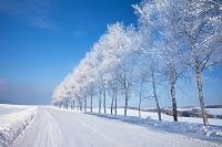 北海道 霧氷と並木道
