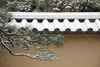 京都府 雪の大徳寺高桐院