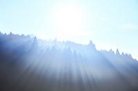 霧の樹林に射し込む光