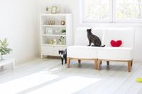 窓辺のソファと2匹の猫