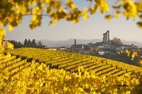 イタリア ピエモンテ ブドウ園