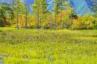 長野県 ツツジ咲く初夏の乗鞍高原どじょう池