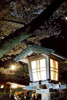 石川県 夜桜と灯篭