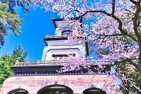 石川県 桜の尾山神社