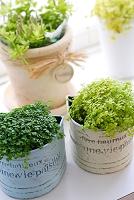 植物グリーン