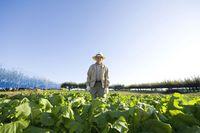 畑に立つシニアの日本人男性