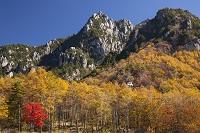 山梨県 瑞牆山とカラマツ黄葉