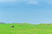 栃木県, 日光市, 牧場