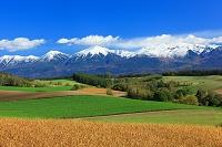 北海道 美瑛の丘 冠雪の十勝岳連峰と美瑛の丘