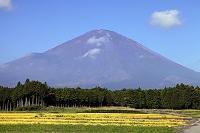 静岡県 御殿場付近の農地から見る富士山