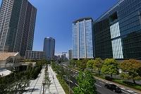 東京都 青空と豊洲のビル群