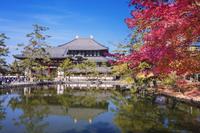 奈良県 紅葉の鏡池と東大寺 大仏殿 奈良公園