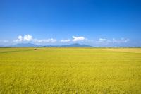 新潟県 田園と山並み
