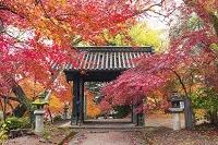 福岡県 秋月城趾 黒門