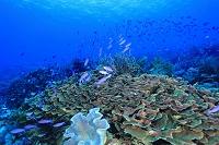 インドネシア コモド諸島 サンゴ礁のイメージ