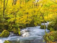 日本 青森県 奥入瀬渓流の紅葉