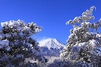 山梨県 富士山と雪景色