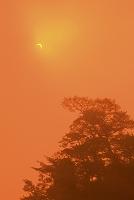 岩手県宮古市 山王岩の松と日食