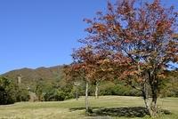江府町 青空と紅葉の高原