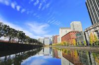 東京都 皇居外苑馬場先濠沿いの銀杏並木と丸の内の高層ビル群