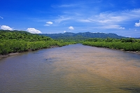 沖縄県 前良川マングローブ林 西表島