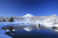 北海道 ふきだし公園からの羊蹄山と霧氷