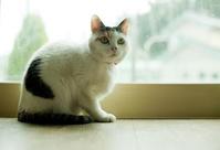 ハート模様の猫 岩手県大船渡市