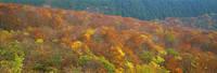 鳥取県 桝水高原