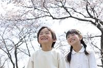 桜と日本人の子供のカップル
