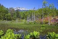 長野県 乗鞍高原、市ノ瀬園地のどじょう池