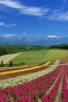 北海道 四季彩の丘