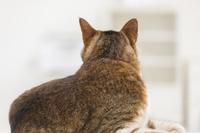 寝転んで振り向く猫の後ろ姿