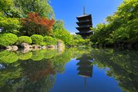 京都府 新緑の東寺の五重の塔と瓢箪池