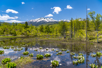 長野県 どじょう池と乗鞍岳
