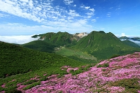 大分県 ミヤマキリシマと九重連山