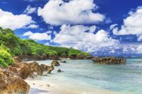 沖縄県 浜シタン群落