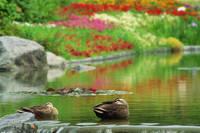 大阪府 鶴見緑地公園