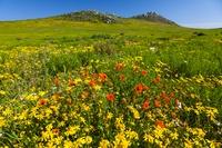 南アフリカ共和国 ウェスト・コースト国立公園