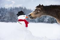 雪だるまのニンジンを食べるポニー