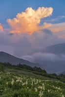 長野県 爺ヶ岳のお花畑と夕照のかなとこ雲
