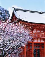 京都府 下鴨神社 雪の紅梅と楼門