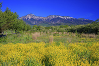 長野県 カラシナ咲く野辺山高原より新緑の八ヶ岳